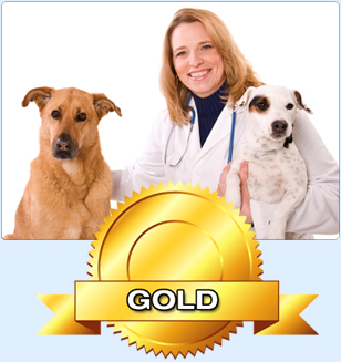 Search Engine Optimization for Veterinary Hospital Websites - Top Dog Rankings